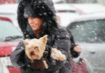 На Москву идет затяжной предновогодний снегопад