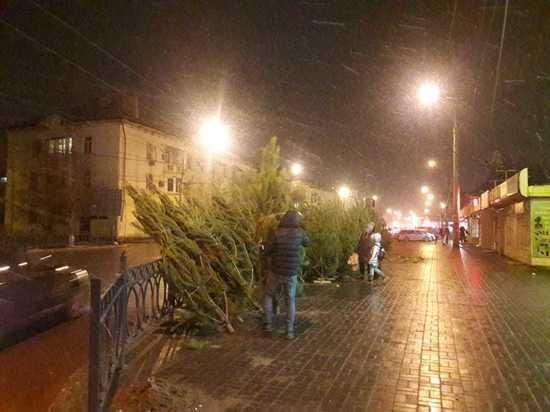 Где в Астрахани можно официально купить елку?