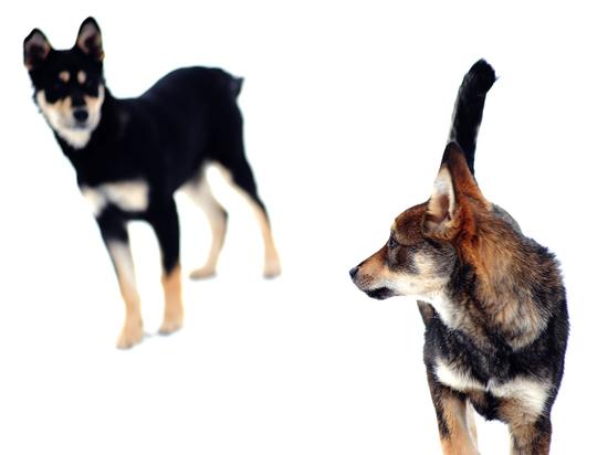 Совфед одобрил закон о защите животных