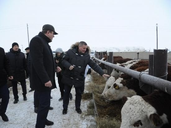 Волгоградский регион взял курс на увеличение объемов животноводства