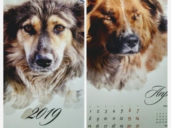 Омский приют «Друг» выпустил календарь с бездомными собаками