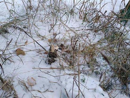 Вандалы в Саянске срубили голубую ель из сквера Ветеранов