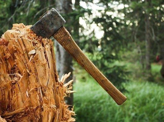 В Белореченском районе мужчина вырубил 9 деревьев на 3 миллиона