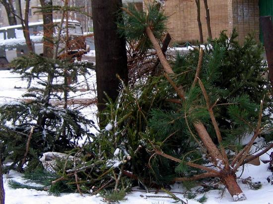 Число пунктов приема новогодних елок в Москве увеличится в сотни раз