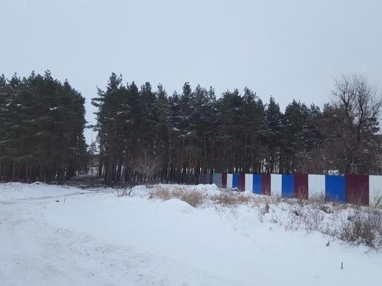 Для строительства лесной дороги вырубили сосны в Заволжском районе