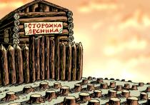 Байкальская прокуратура рассказала  о злоупотреблениях лесников