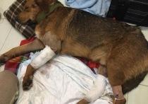 Новый закон о защите животных: что ждет тверских живодеров