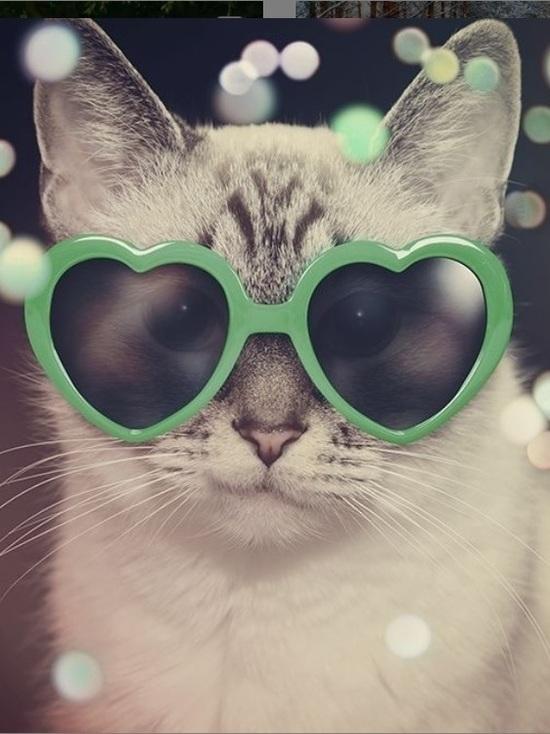 Свердловским абонентам предлагают поздравить кота с новым годом