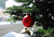 Синтия Карти из Шеффилдского университета заявила, что семь миллионов новогодних ёлок, которые через несколько недель окажутся выкинуты на улицу в одной лишь Великобритании, могут принести ущерб экологии