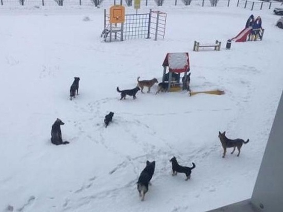 Спасите двор от бродячих собак: барнаульцы создали очередную петицию