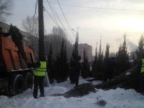 Лесорубы незаконно продавали елки в Нижнем Новгороде