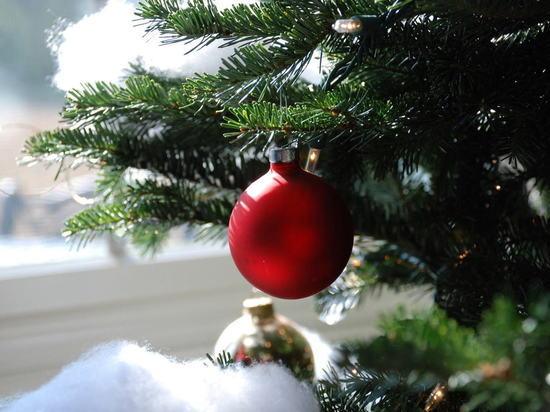 Британский учёный предложила необычное применение иголкам новогодних ёлок