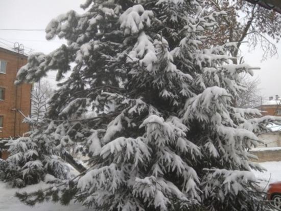 Завтра в Смоленской области до минус трех мороза, умеренный снег