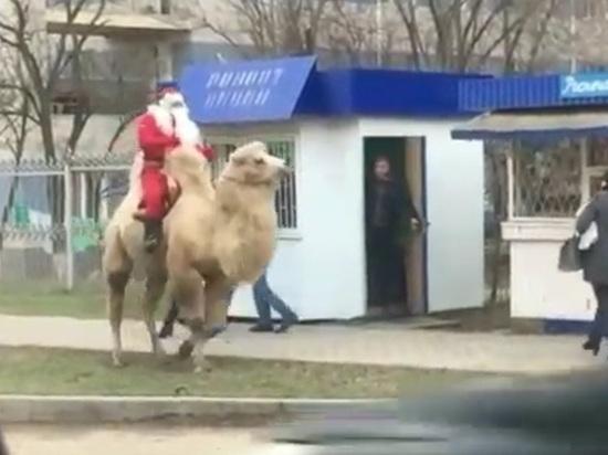 Новый год к вам мчится на санях, а в Калмыкию – на верблюде