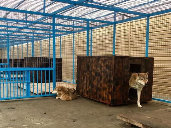 Хищники из Нальчикского зоопарка справили новоселье под Новый год