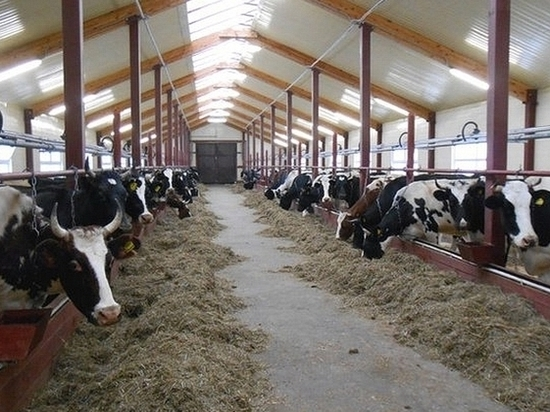 Валовая сельхозпродукция в Татарстане достигнет 225 млрд рублей