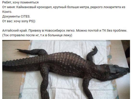 Мертвого крокодила на игровую приставку решила обменять жительница Алтая