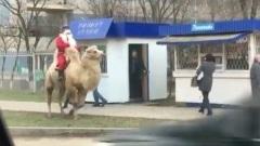 В Калмыкии Дед Мороз разъезжает на верблюде