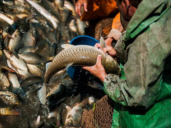 Калмыкия подвела итоги рыбодобычи на Северном Каспии