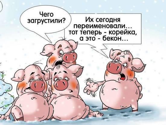 «МК на Алтае» поздравляет жителей Алтайского края с Новым годом