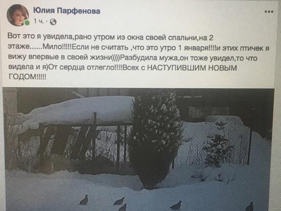 В деревне Тверитино городского округа Серпухов любовались куропатками