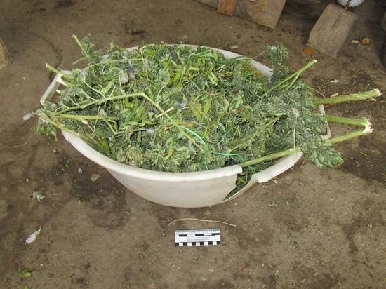 У жителя Ставрополья изъяли килограмм марихуаны