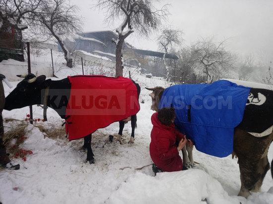 Коровы и несколько десятков поросят сгорели в пожаре в Калуге