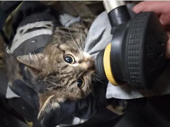 На пожаре в Иркутском районе спасли кота