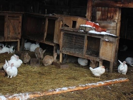 Криминальная компания с Алтая украла у односельчанки 30 кроликов