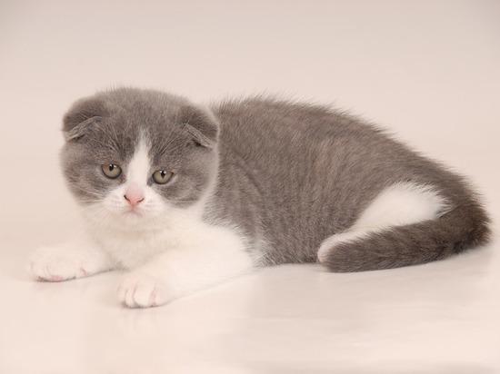 Жительница Барнаула продавала котят через Интернет и лишилась 60 тысяч рублей