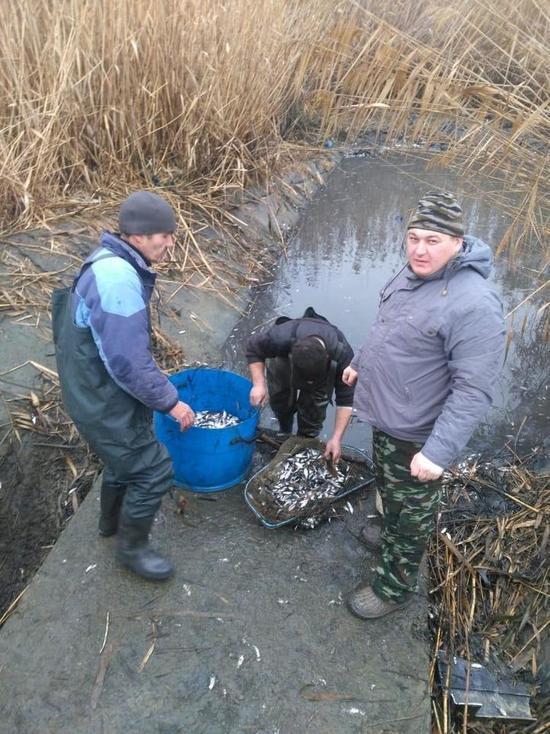 В озере Буйвола рыбу вызволили из ловушки
