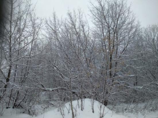 Сегодня в Смоленской области поморозит