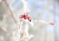 На Рождество синоптики обещают в Москве морозы и ледяные иглы