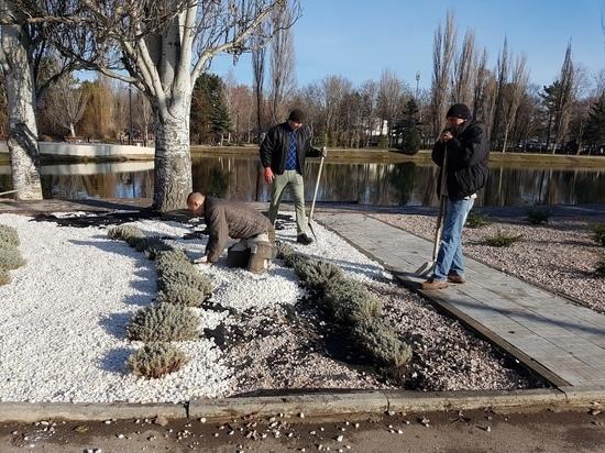 Весной в Симферополе начнётся лавандовое озеленение
