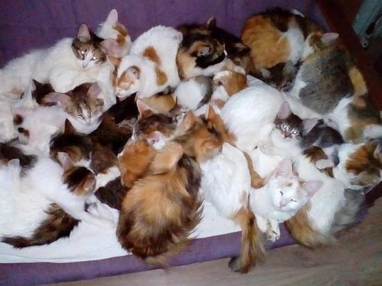 Ярославцы в поле нашли мешок с 20 живыми кошками
