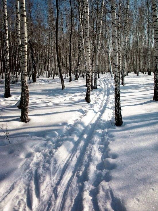 В Ульяновской области в лесу нашли тело пожилого лыжника