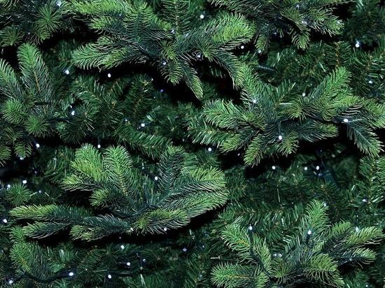 Эколог КФУ рассказала о второй жизни новогодних елок