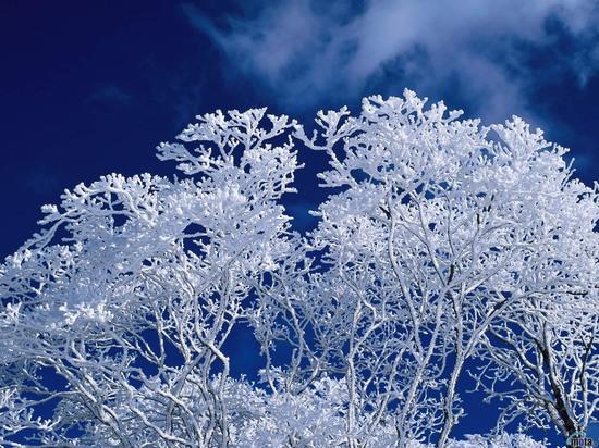 В Ульяновской области становится еще морознее