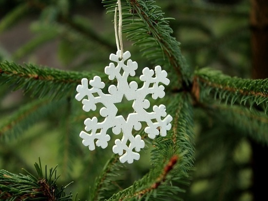 Куда сдать новогоднюю елку в Барнауле