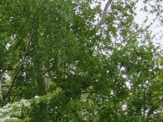 Департамент лесного хозяйства Свердловской области потерял