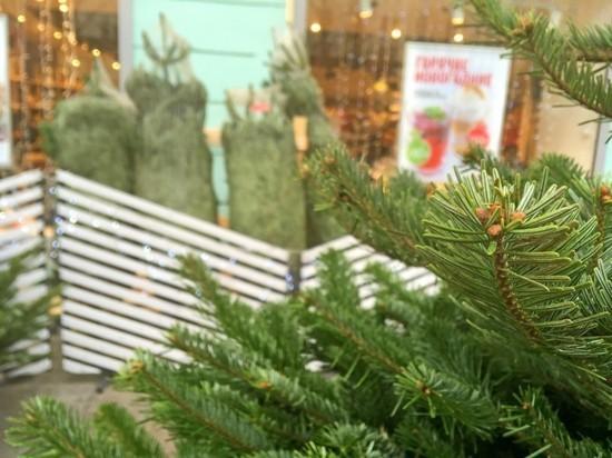 Крымчане смогут сдать елки на утилизацию