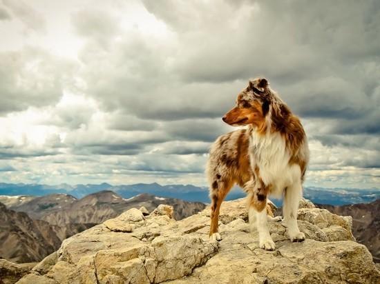 В Севастополе спасатели сняли со скалы собаку