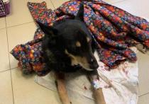 Подмосковные врачи разыскивают мужчину, которого укусила бешеная собака