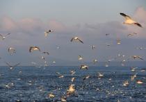 В Госдуму внесли законопроект о Курильских островах