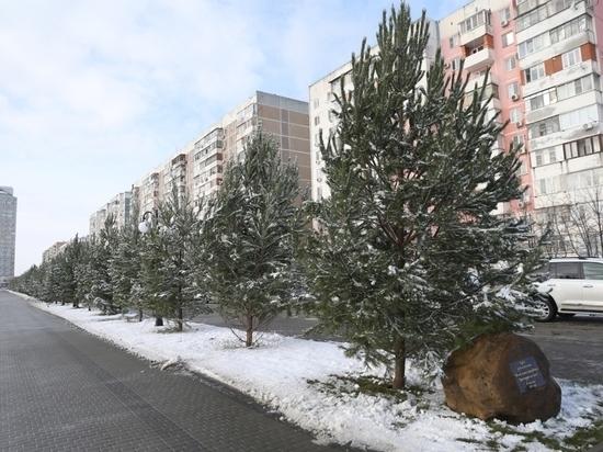 В Краснодаре открыли первую очередь аллеи в честь 80-летия края