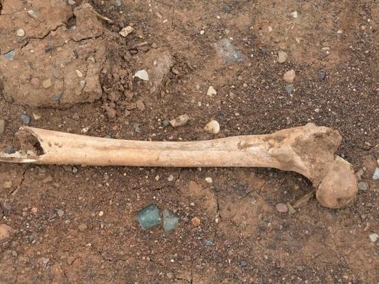 В шахте лифта нашли человеческие кости, позвонки и челюсть