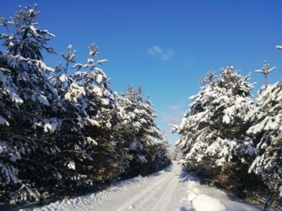 Сегодня в Смоленской области до минус десяти, на дорогах гололедица