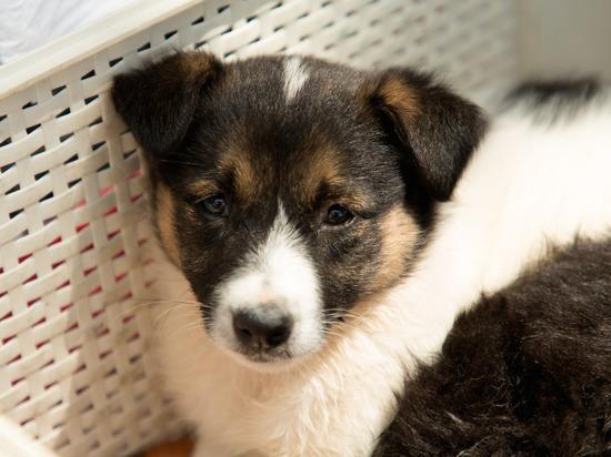 В Волгограде на улице мерзнут и голодают шесть щенят и их мама