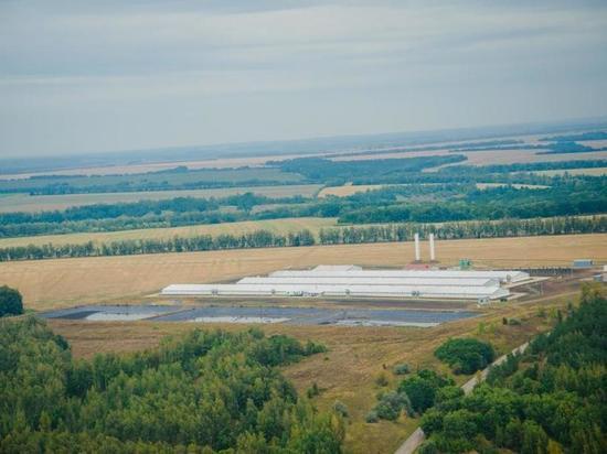 В компании «Мираторг» работает почти две тысячи курян