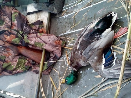 16 случаев нарушения правил охоты выявлены в регионе с начала года